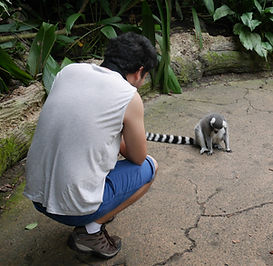 Fragile forest du zoo de Singapour