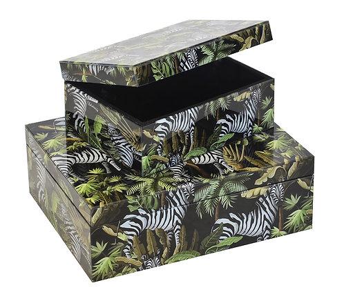 Glass Box Zebra