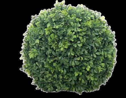 Ball Boxwood