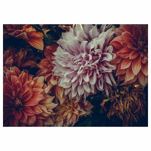 Dahlia Disposable Placemat