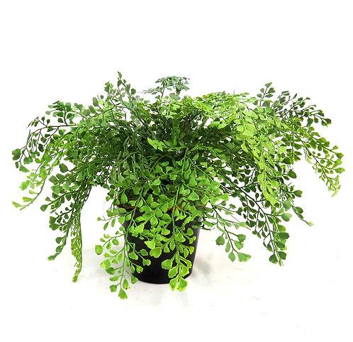 Maiden Fern Pot