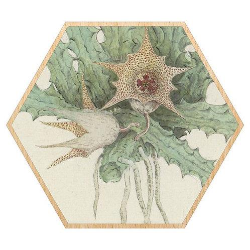 Museum Succulent Framed Prints