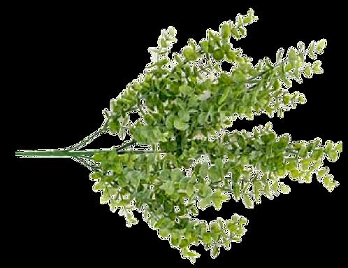 Eucalyptus Bush Green