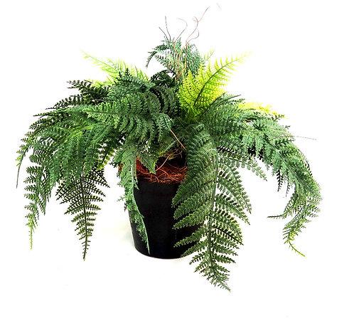 Forest Fern Pot