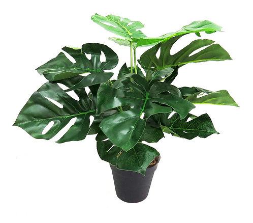 Mini Monster Plant