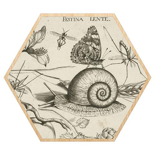 Museum Snail Framed Print