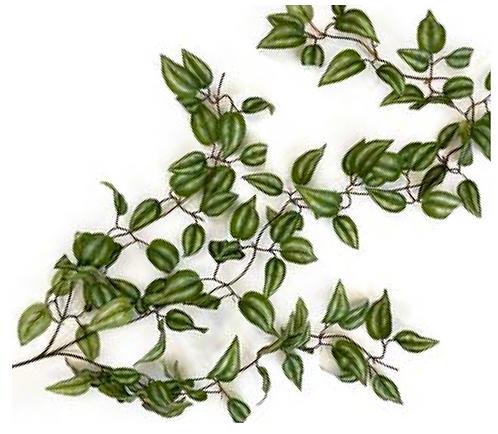 Hanging Varigated Leaf