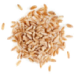 Portion of Spelt Close up top view surfa