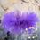 Thumbnail: Purple Tutu