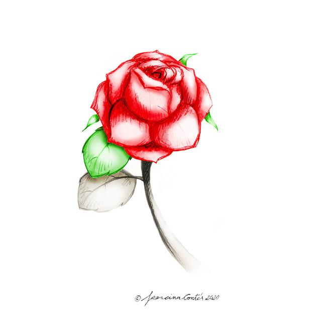 Ilustración 'Rosa enCantada Sant Jordi 2020 'la Palabra / la Paraula'