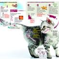 Infografía. 'La domesticación de los gatos'