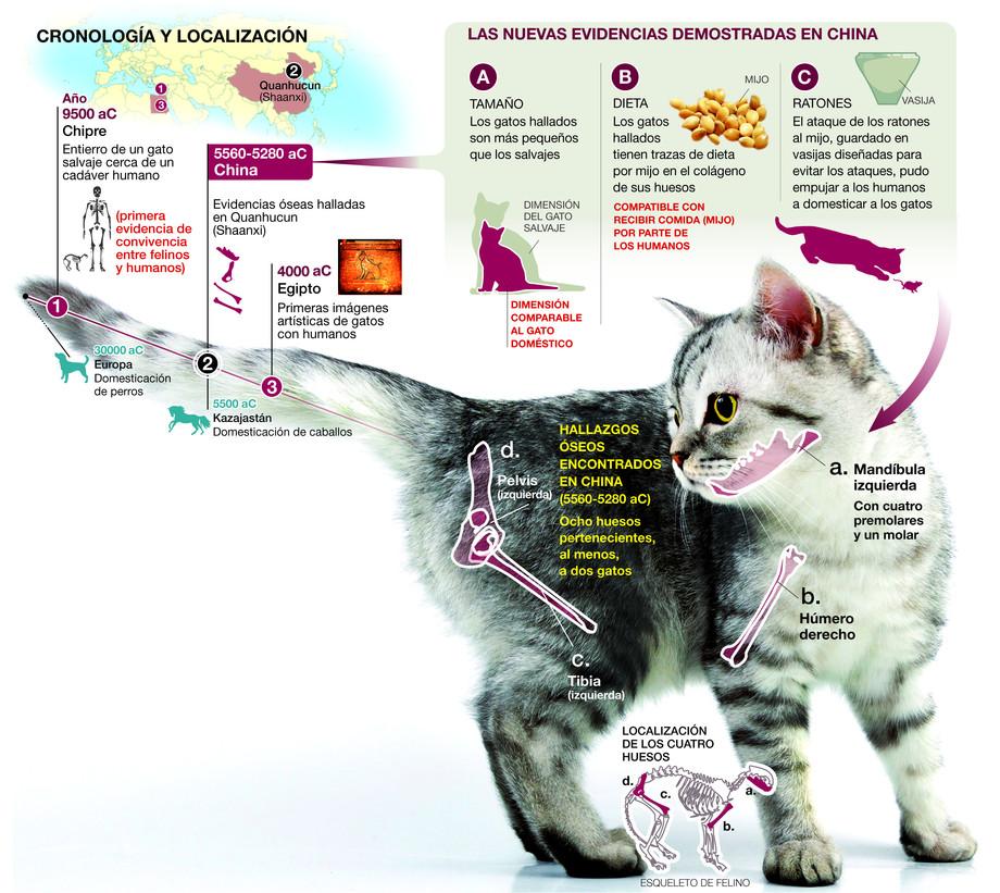 La domesticación de los gatos