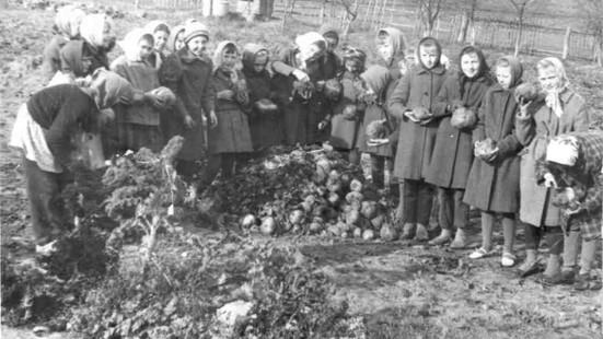 На уборке урожая 1953 год.jpg