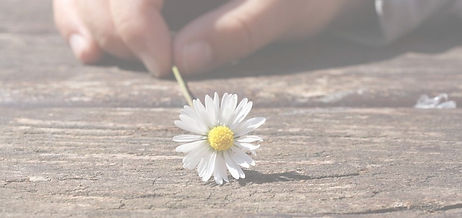 daisy-75190_960_720_edited.jpg