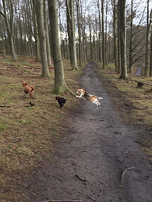 dog walker horsforth cookridge adel bramhope