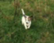 dog walker horsforth cookridge adel bramhope
