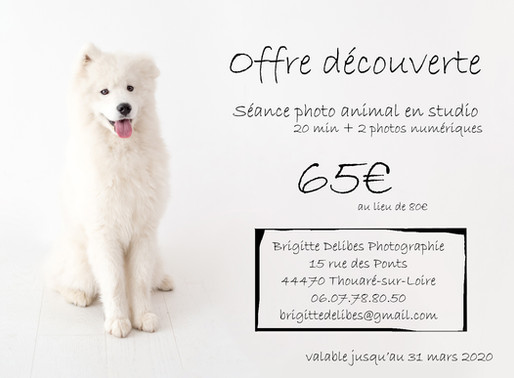 Offre Promotionnelle - Séance photo animal au studio