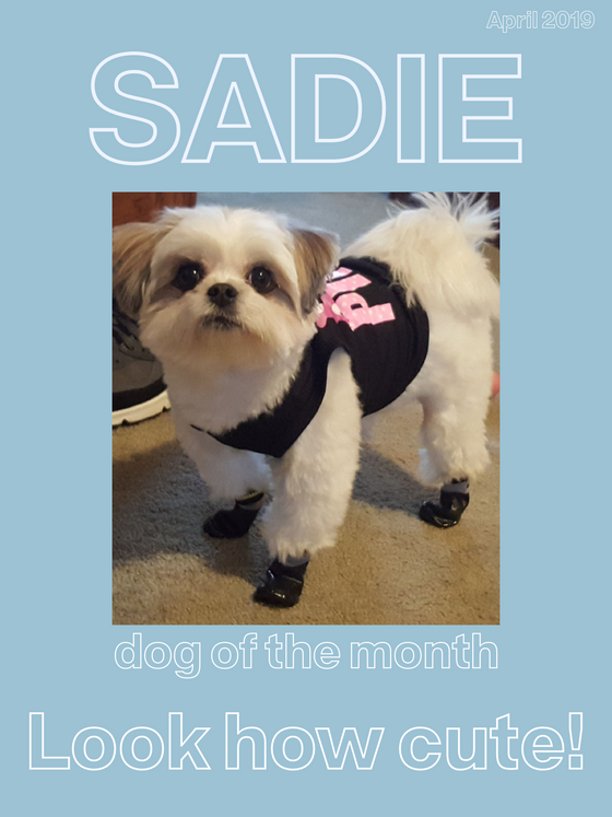 April 2019 Dog of the Month