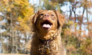 More Autumn Safeguards For Your Pet