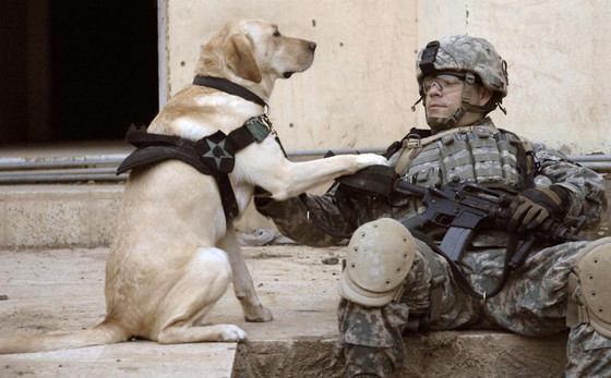 Veterans Day at Pam's Paws