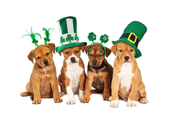 Happy St. Patricks Day from all of us at Pam's Paws!