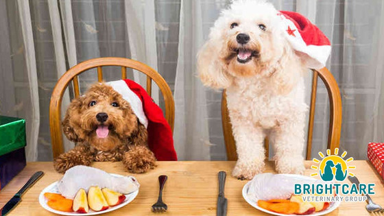 Dog-Friendly Thanksgiving Foods