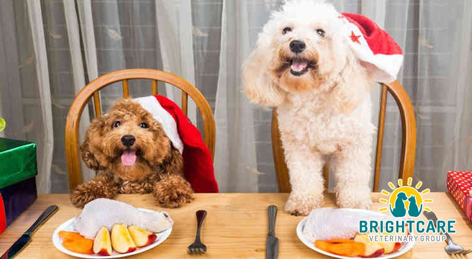 Thanksgiving Feast for Dogs
