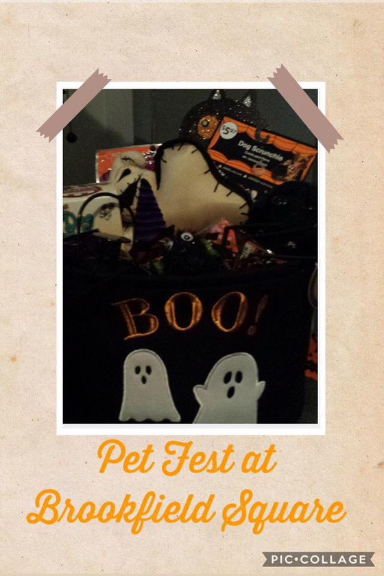 Pet Expo @ Brookfield Square 🐾