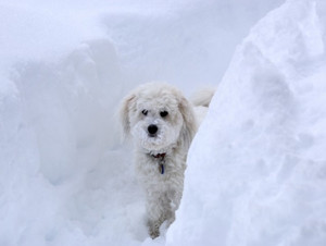 Winter Safety Tips for Dogs (and their owners)