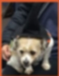 halloween 9a Little Witch.jpg