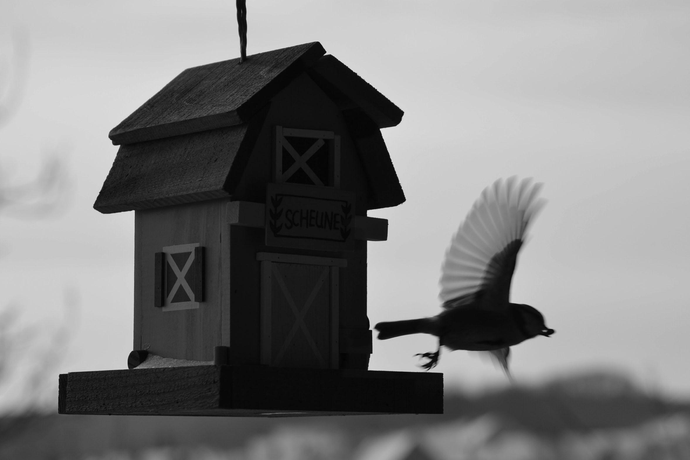 """Bird Set Free"" 29 €"