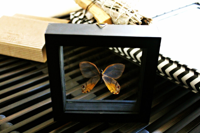 Surprise Find: Peruvian Butterfly Frame