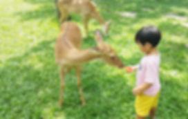 카오키여우 오픈주 (5).jpg