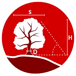 Tree_Surveys_Image.png