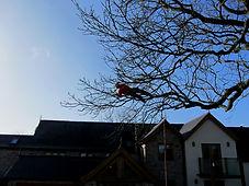 150128Camera%20091_edited.jpg