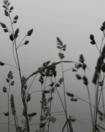 hillaryk_photography_grass.jpg