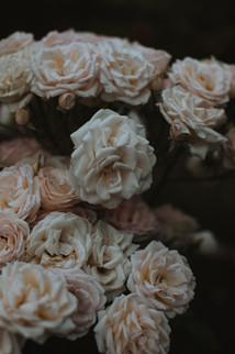 hillaryk_photography_roses.jpg