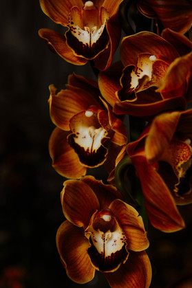 hillaryk_photogrraphy_orchids_2.jpg