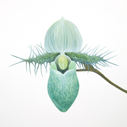 sharnae_beardsley_orchidelerium_product.