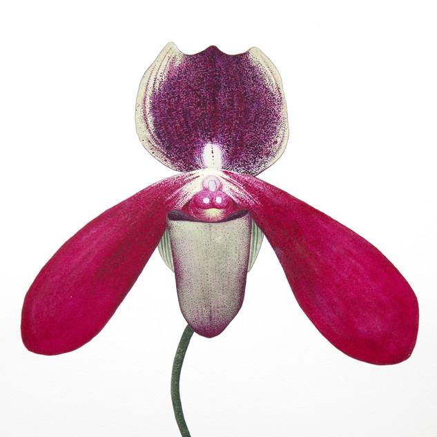 sharnae_beardsley_orchidelerium_product_