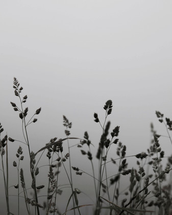 hillaryk_photography_grass_2.jpg