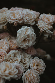 Roses photography