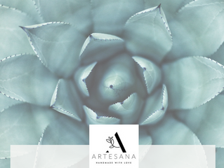 Ingredient of the Month: Aloe Vera