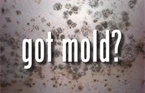 Mold in Your Home or Business?  We can Help.