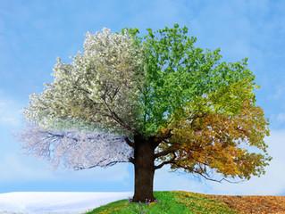 Le printemps nous ensorcelle !
