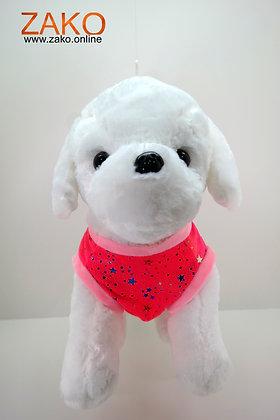Hund -mit Shirt