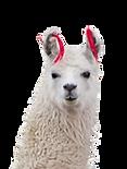 alpaca.png