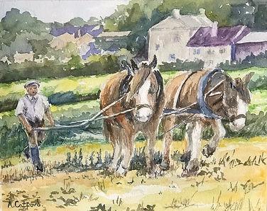 3 At the plough IMG_5368.jpeg
