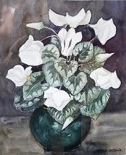 6 White Cyclamen IMG_5359.jpeg