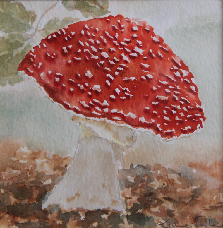 Fly Agaric (poisonous) IMG_1134.jpeg